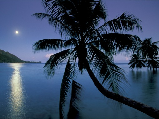 Moonlight over Opunohu bay, Moorea, Tahiti